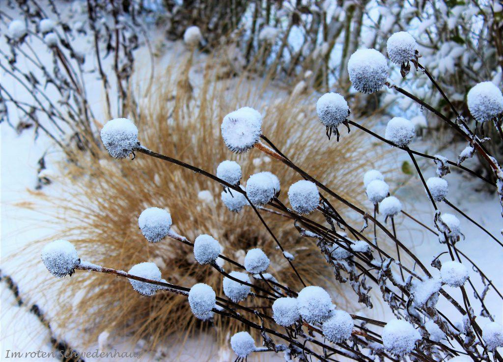 Gras mit Schneegestöber.